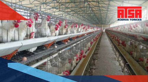 Monten avícola: polines a prueba de plumas de pájaro